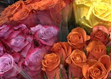 Bouquets of orange, purple, and yellow roses from above stock images
