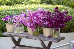 Bouquets orchid flowers in the tropical yard on a wooden table Royalty Free Stock Photos