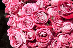Bouquets of pink roses Royalty Free Stock Photos
