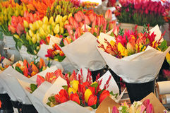 Bouquets of tulips Stock Image