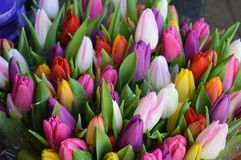 Bouquets tulips Royalty Free Stock Photo