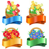 Bouquets of tulips and gerberas in baskets with festive ribbons Stock Image