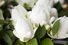Bouquets of White Lotus Stock Photo