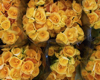 Bouquets of yellow begonia Stock Photo