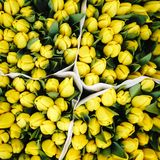 Yellow Tulips at the Flower Market of Amsterdam royalty free stock images