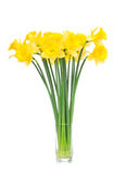 Bouqut of yellow lent lilyl daffodil or narcissus Stock Photo