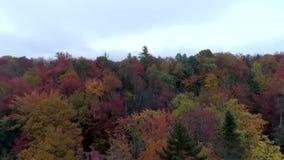 Bourdon aérien - cimes d'arbre de lait écrémé dans l'automne au Vermont banque de vidéos