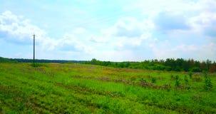 Bourdon aérien tiré d'un champ vert avec des fleurs clips vidéos