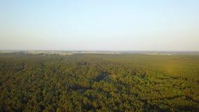 Bourdon aérien tiré de la forêt de pin banque de vidéos