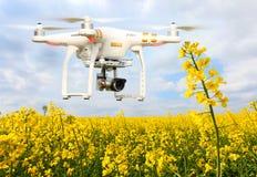Bourdon dans l'agriculture Photos libres de droits