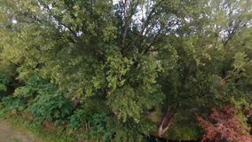Bourdon de vol jusqu'au dessus d'un arbre clips vidéos
