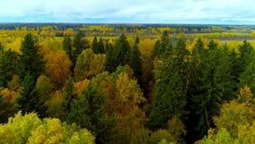 Bourdon jaune lumineux d'hélicoptère de vue aérienne d'air de couleur de chute de forêt d'automne en Russie banque de vidéos