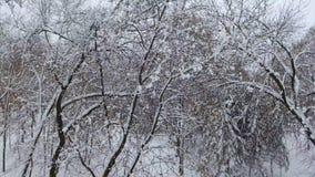 bourdon 4K tiré du parc d'hiver à l'altitude de l'arbre Le bourdon vole à partir de l'arbre et  banque de vidéos