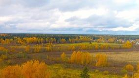 Bourdon lumineux d'hélicoptère de vue aérienne d'air de couleur rouge de jaune orange de chute de forêt clips vidéos