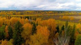 Bourdon lumineux d'hélicoptère de vue d'air de couleur rouge de jaune orange de forêt d'automne en Russie clips vidéos