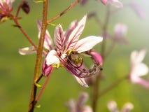 Bourdon se reposant sur la fleur sauvage image stock