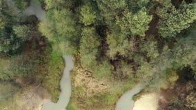 Bourdon volant au-dessus de la forêt clips vidéos