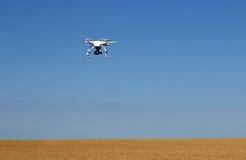 Bourdon volant au-dessus du champ de blé Photographie stock
