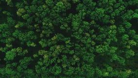 Bourdon volant en avant au-dessus du tir aérien de topview du survol 4K de belle forêt verte banque de vidéos