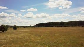 Bourdon volant en avant, filtrant juste au-dessus du pré Tir aérien du champ d'herbe calme d'été et de la forêt éloignée 4K banque de vidéos
