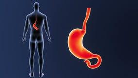 Bourdonnement d'estomac avec le corps illustration de vecteur