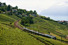 Train at Vineyard Terraces Lavaux at Lake Geneva Swiss Alps. Bourg-en-Lavaux, Switzerland - August 30, 2016: Running train at Lavaux Vineyard Terraces hiking royalty free stock photos