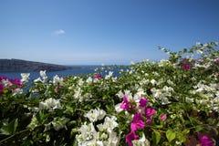 bourgainillea, Santorini墙壁  免版税库存图片