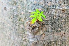 Bourgeon d'arbre Photographie stock libre de droits