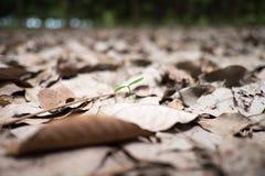 Bourgeon dans des feuilles tombées Photo libre de droits