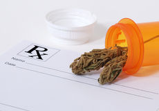 Bourgeon de cannabis photographie stock libre de droits