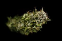 Bourgeon de marijuana sur le fond noir Photographie stock libre de droits