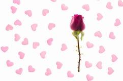 Bourgeon de rose de rouge à un arrière-plan rose de coeurs Images stock