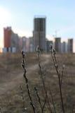 Bourgeon de saule sur le paysage urbain Photographie stock
