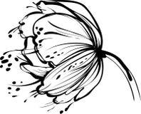 Bourgeon floral blanc Photos stock