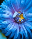 Bourgeon floral bleu Images stock