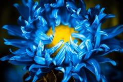 Bourgeon floral bleu Photographie stock