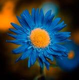 Bourgeon floral bleu Photo libre de droits