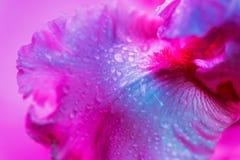 Bourgeon floral color? au n?on vif d'iris images libres de droits