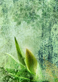 Bourgeon floral sur le fond floral Images libres de droits