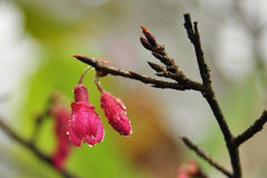 Bourgeon floraux Photographie stock