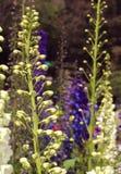 Bourgeon floraux décoratifs de jardin Images stock