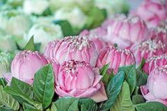 Bourgeon floraux frais de lotus avec les feuilles vertes Images stock