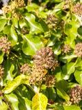 Bourgeon floraux intéressants de cercle à l'extérieur s'élevant sur le backgrou d'arbre Image stock