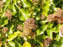 Bourgeon floraux intéressants de cercle à l'extérieur s'élevant sur le backgrou d'arbre Image libre de droits