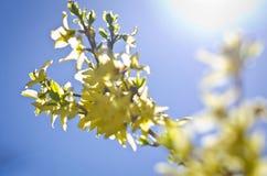 Bourgeon floraux jaunes dans le ciel Photo stock