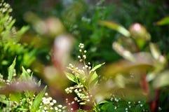 Bourgeon floraux sensibles Image stock