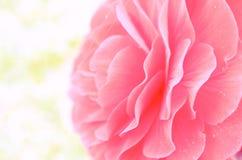 Bourgeon indiqué de fleur rouge en plan rapproché différent de tonalité Photographie stock libre de droits