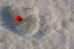 Bourgeon orange jeté de tulipe se situant dans la neige photos libres de droits