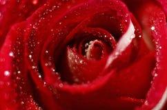 Bourgeon rose de plan rapproché Photo libre de droits