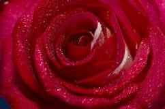 Bourgeon rose de plan rapproché Image libre de droits